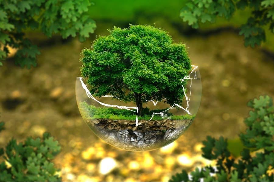 緑の茂った木のオブジェクト